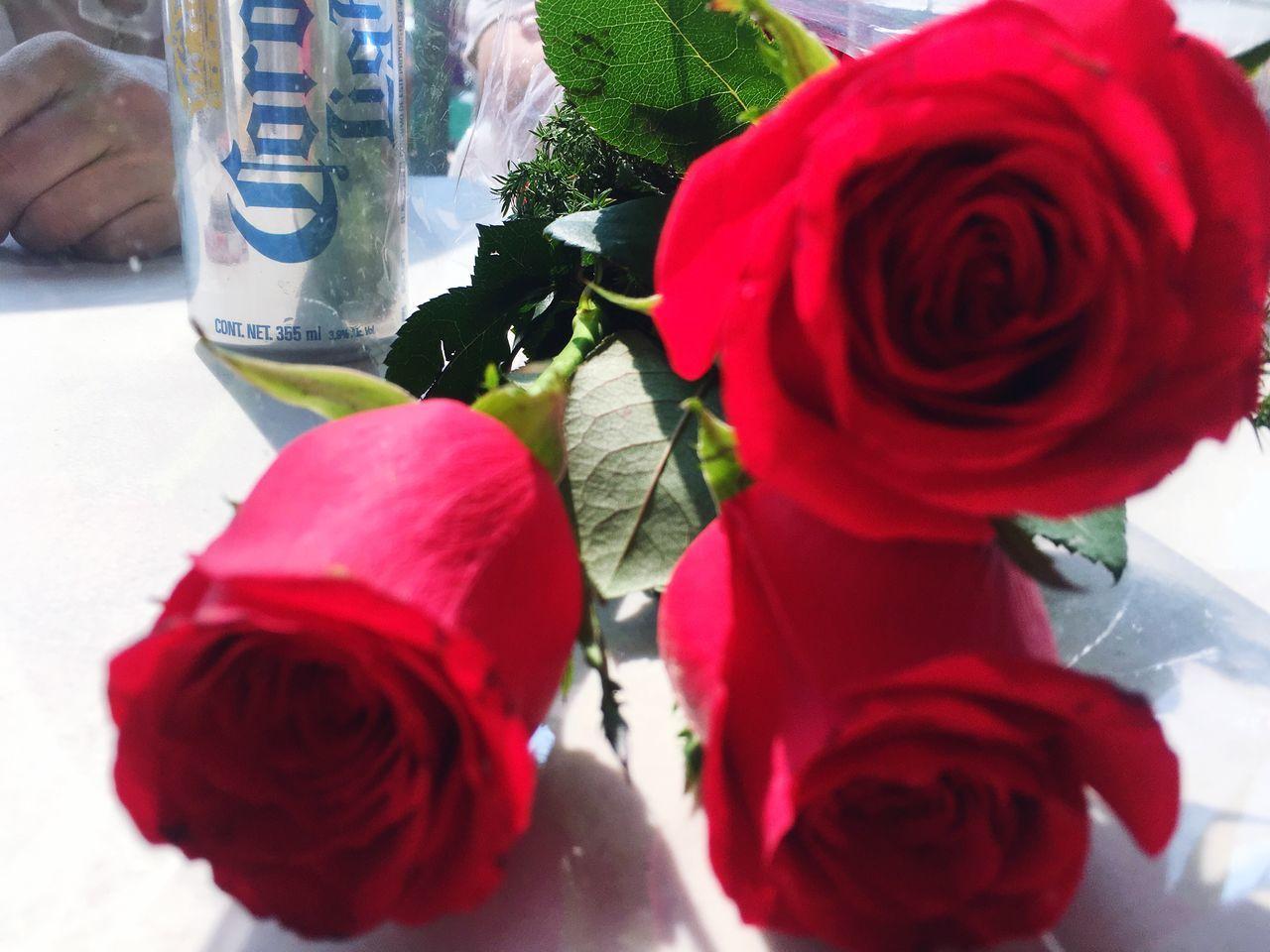 Amor entre copas... Flower Rose - Flower Petal Fragility Nature Freshness Day Beer Close-up Tranquility Disfrutando De La Vida IPhone