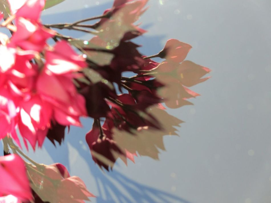 floral abstraction Floral Backgrounds Floral Abstract Reflections Abstract Abstract Nature Pink Color Maroon Multi Colored Pink Flowers Beauty In Nature No People