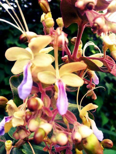 IFlower Beautiful Nature