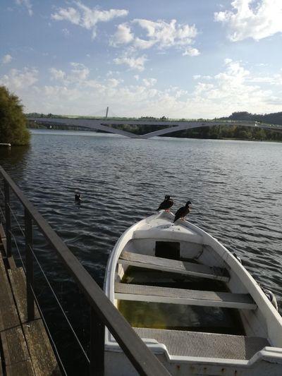 Patos Duck Boat Coimbra Portugal Ponte Pedro E Inês Ponte Pedonal D.Pedro E D.Inês Bridge Mondego River Mondego