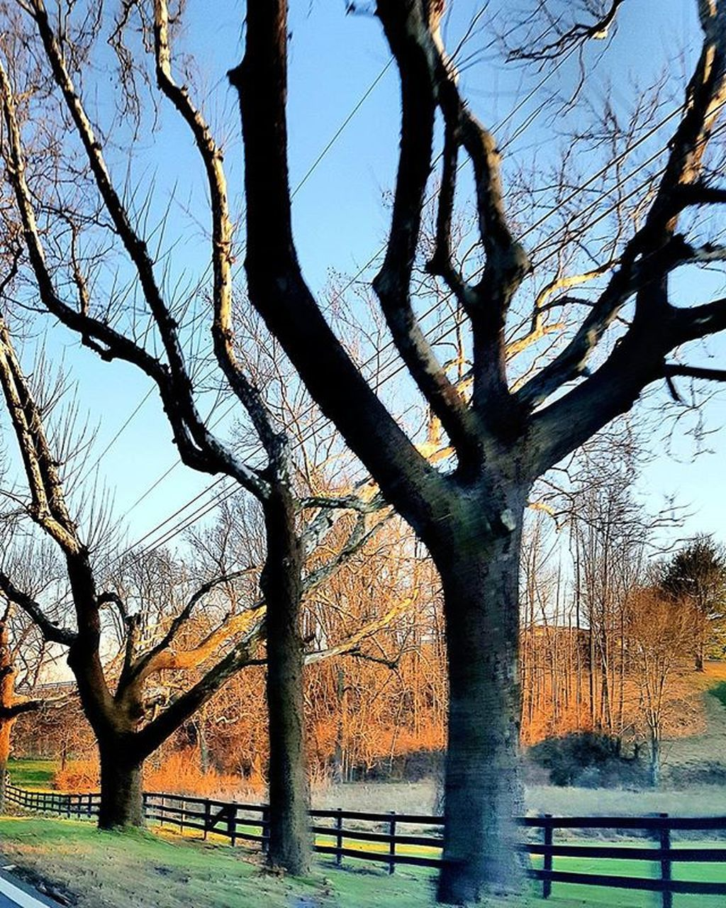 tree, bare tree, tree trunk, branch, nature, day, outdoors, growth, no people, tranquility, beauty in nature, sky