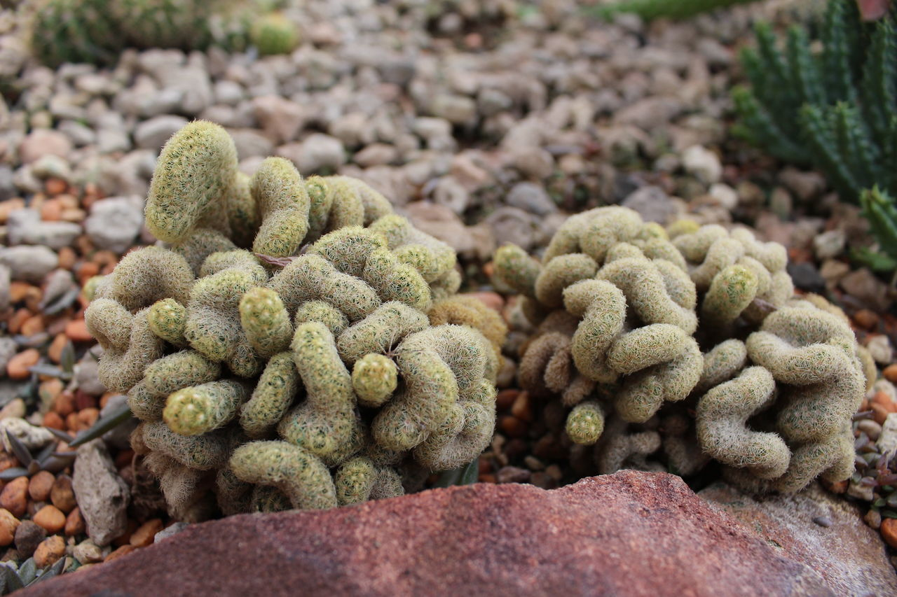 High Angle View Of Cactus Plants By Rock