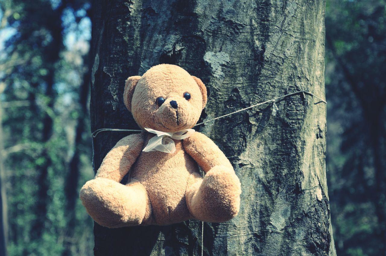 Beautiful stock photos of teddy bear, Animal Representation, Art, Brown, Creativity