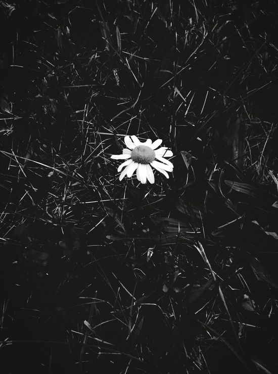 Stand Alone The Lone Soldier Flowers Nature Natural Beauty Daisy Flower