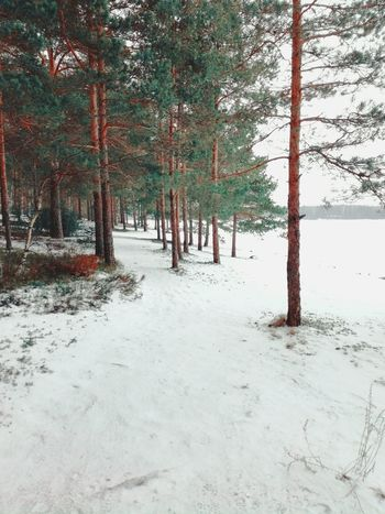 Tree Nature Outdoors Tranquility No People Day Beauty In Nature Landscape Beach Snow Cold Temperature Finland Wintertime Freshness Pines Pine Forest Path