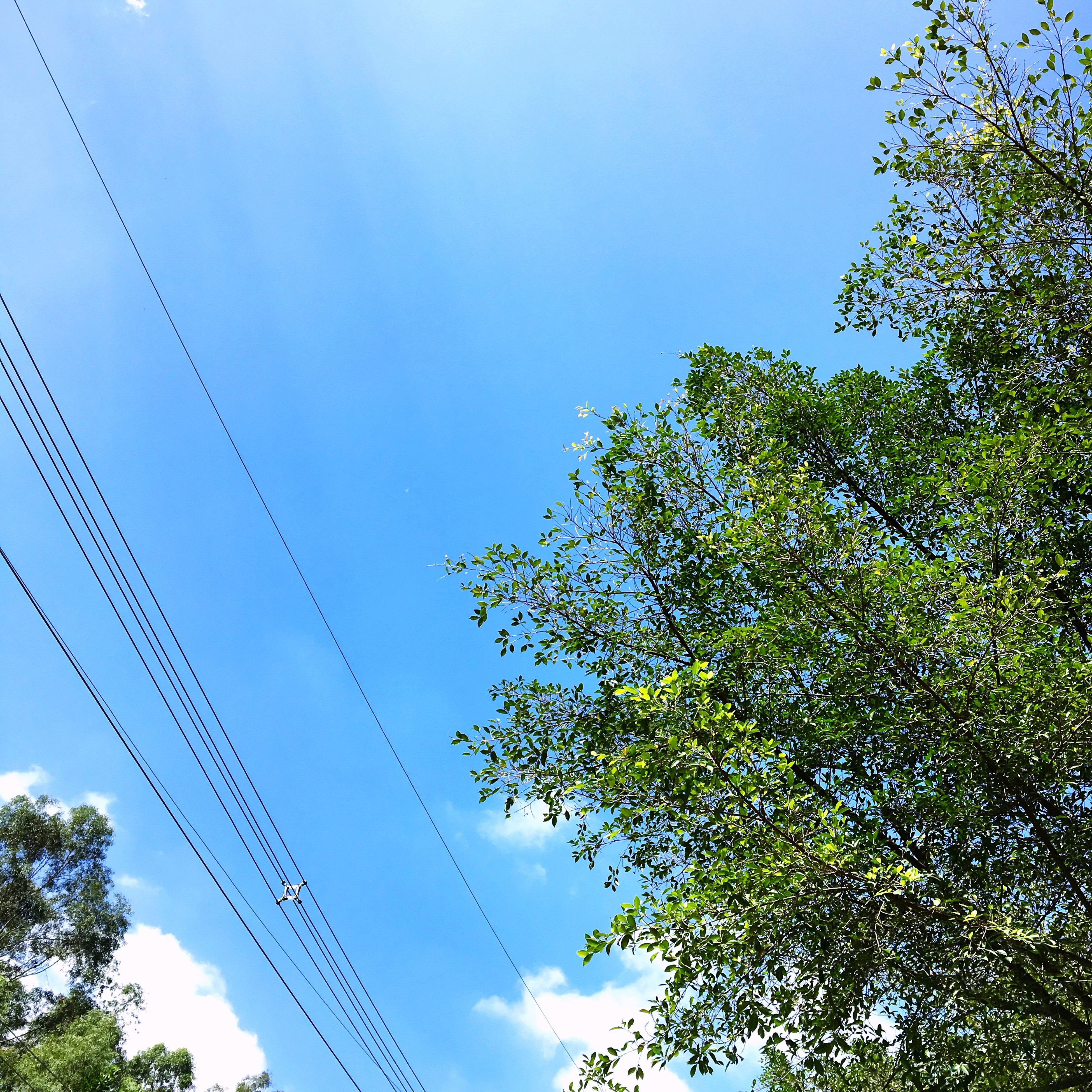 tree, low angle view, blue, clear sky, growth, day, branch, nature, sky, scenics, tranquility, high section, tranquil scene, beauty in nature, outdoors, no people, power line, treetop, green color