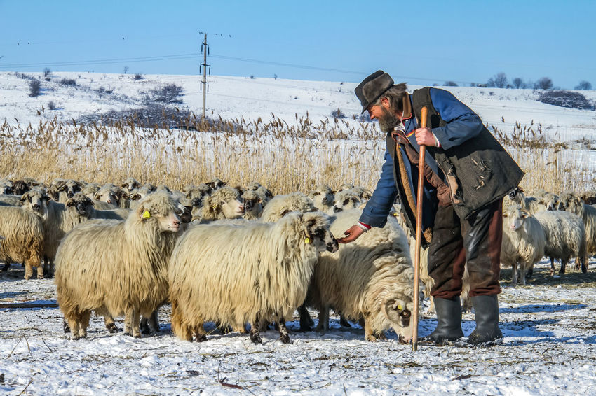 Shepherd Of The Sheep Agriculture Beauty In Nature Cold Temperature Day Domestic Animals Farmer Field Large Group Of Animals Lifestyles Livestock Mammal Men Nature One Person Outdoors People Real People Sky Standing Warm Clothing Winter