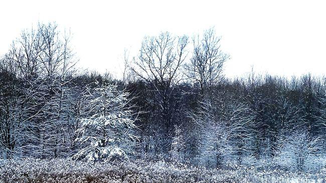 Sky Love ♥ Beautiful Happy :) Tree In Snow Winter Trees Snow Day Snow ❄ Snow Wintertime Winter In Poland Nature Tree Trees Poland Lovely Winter Trees And Sky