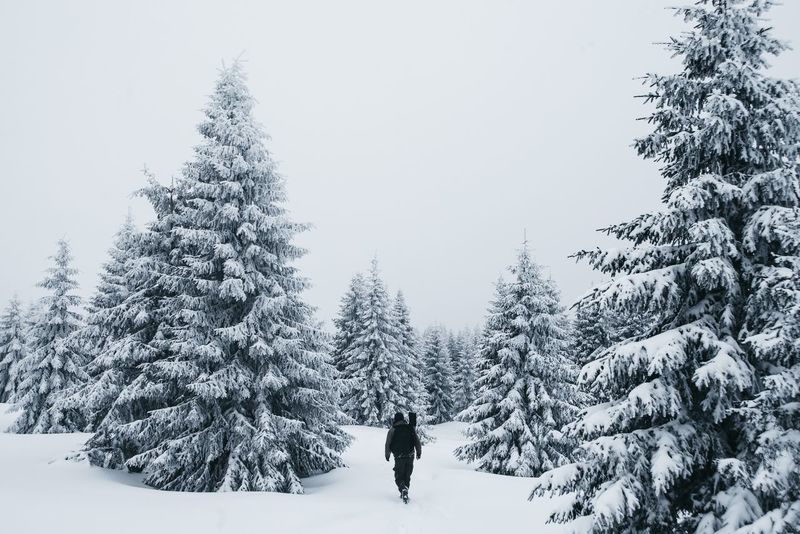 Snowy Mountains Snow Pine Tree Travel Destinations Mountain Snowing Photography Lovetotravel Travel Photography The Great Outdoors - 2017 EyeEm Awards EyeEmNewHere The Great Outdoors - 2017 EyeEm Awards Live For The Story
