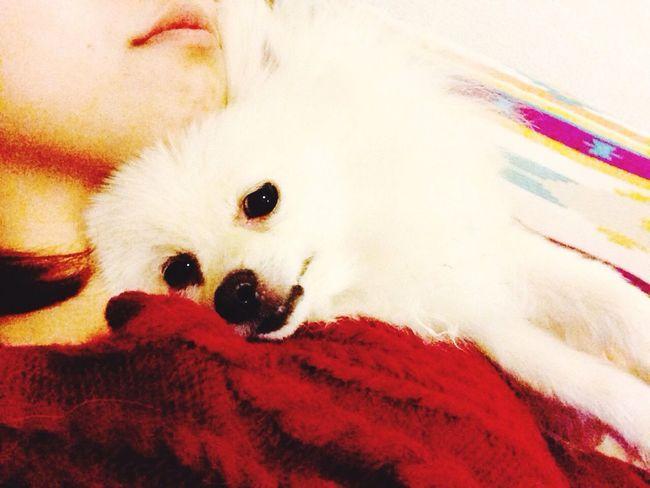 I Love My Dog Dog Korosuke