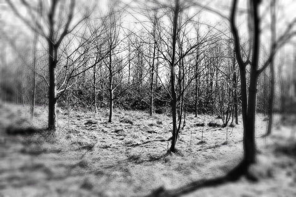 Trees Blackandwhite Deep Focus Nature Outdoors Bare Branches Bare Trees Reflections