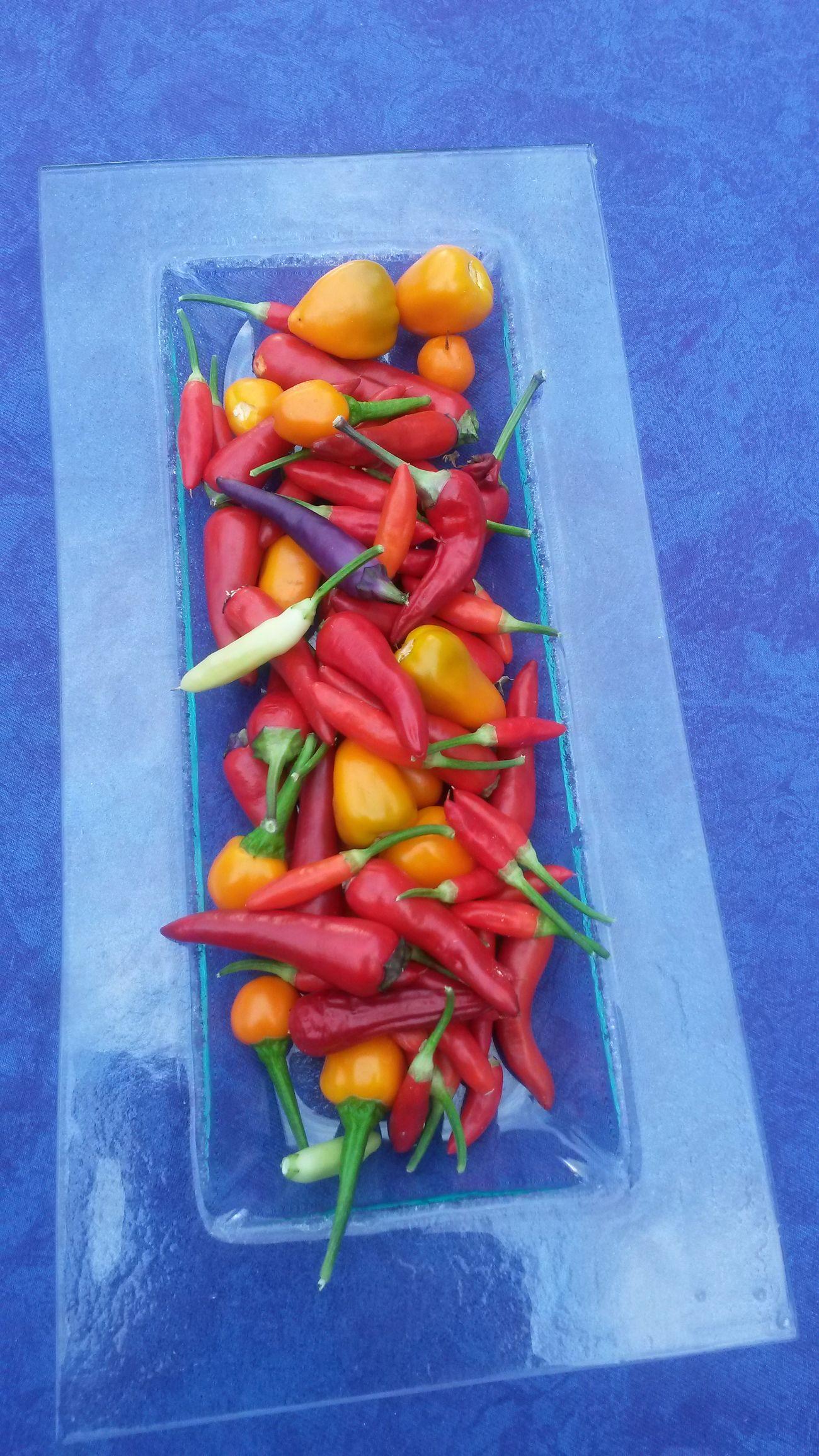 Hot hot Chilis