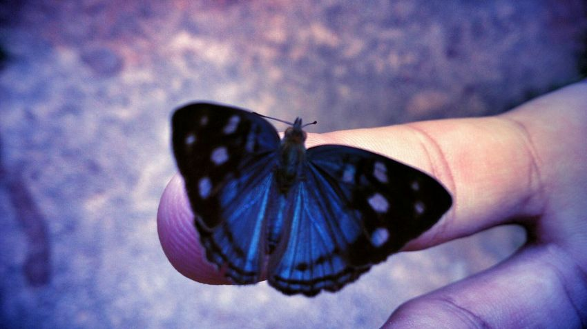 Taking Photos Hello World Butterfly In My Hand Finger Beautiful In Contact With Nature Love This  EyeEm Best Shots Blue