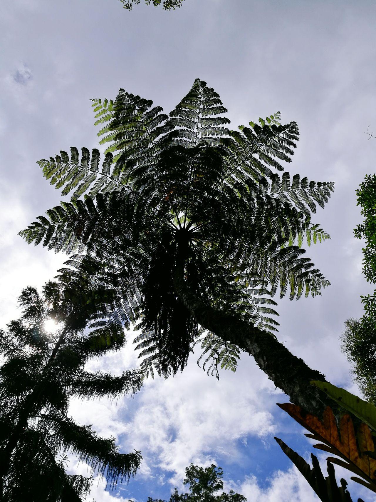 Tambunan Forest, Borneo First Eyeem Photo