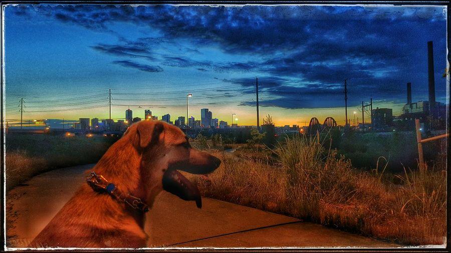 Sammy Denver Sunrise