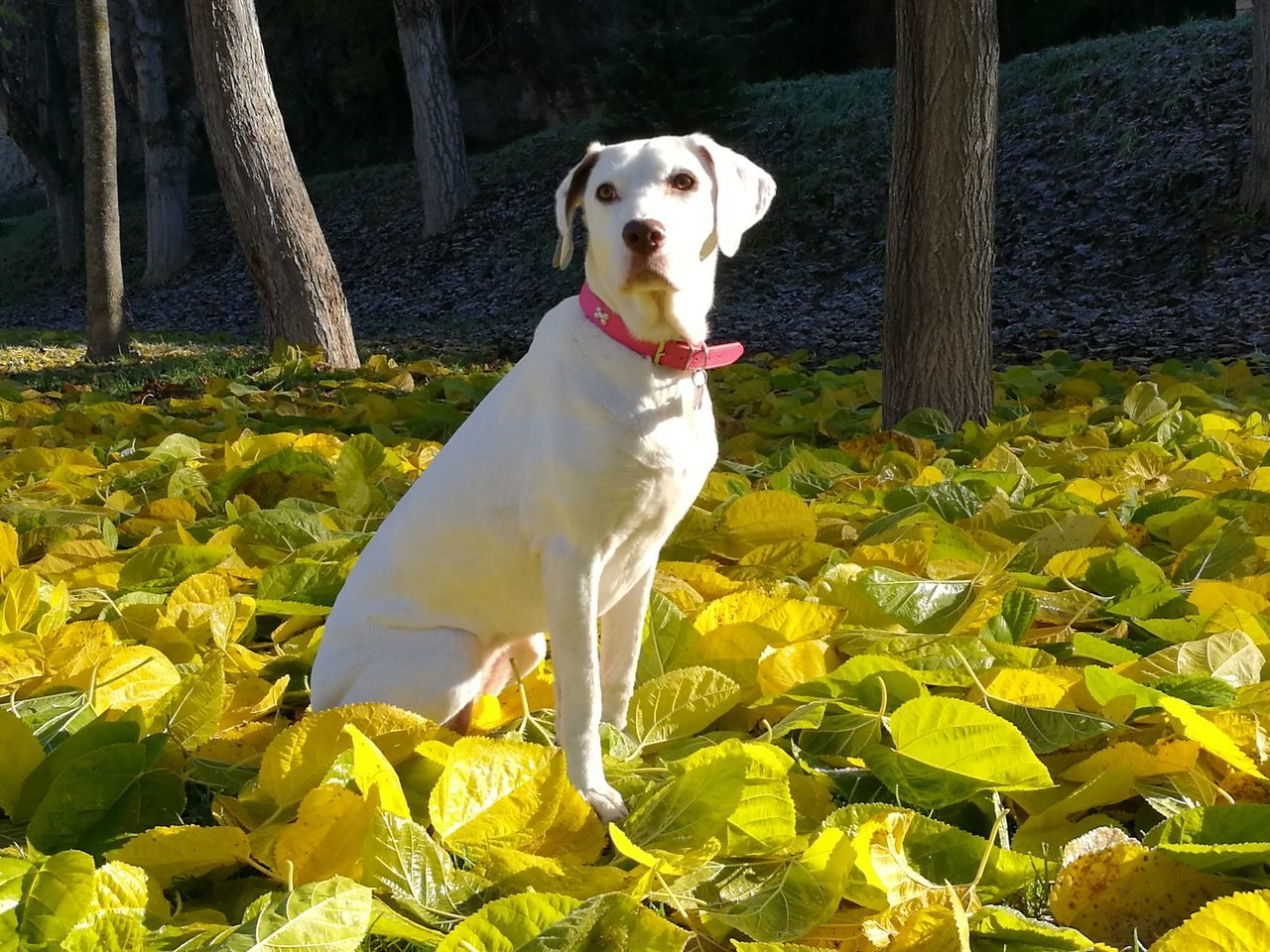 Pets One Animal Dog Domestic Animals Animal Themes Dog❤ Mejor Amigo Por Y Para Siempre. Loveanimals❤️ Perros❤ Nature Beauty In Nature Belleza Animal Sin Filtros HuaweiP9