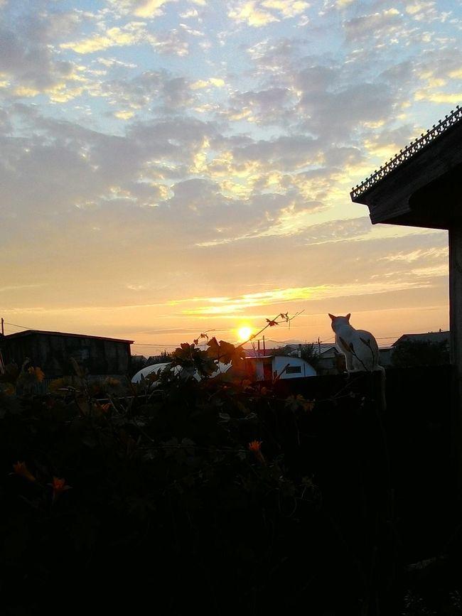 Relaxing Taking Photos Hello World People Watching First Eyeem Photo Cat Cat♡ Sunset Sunshine