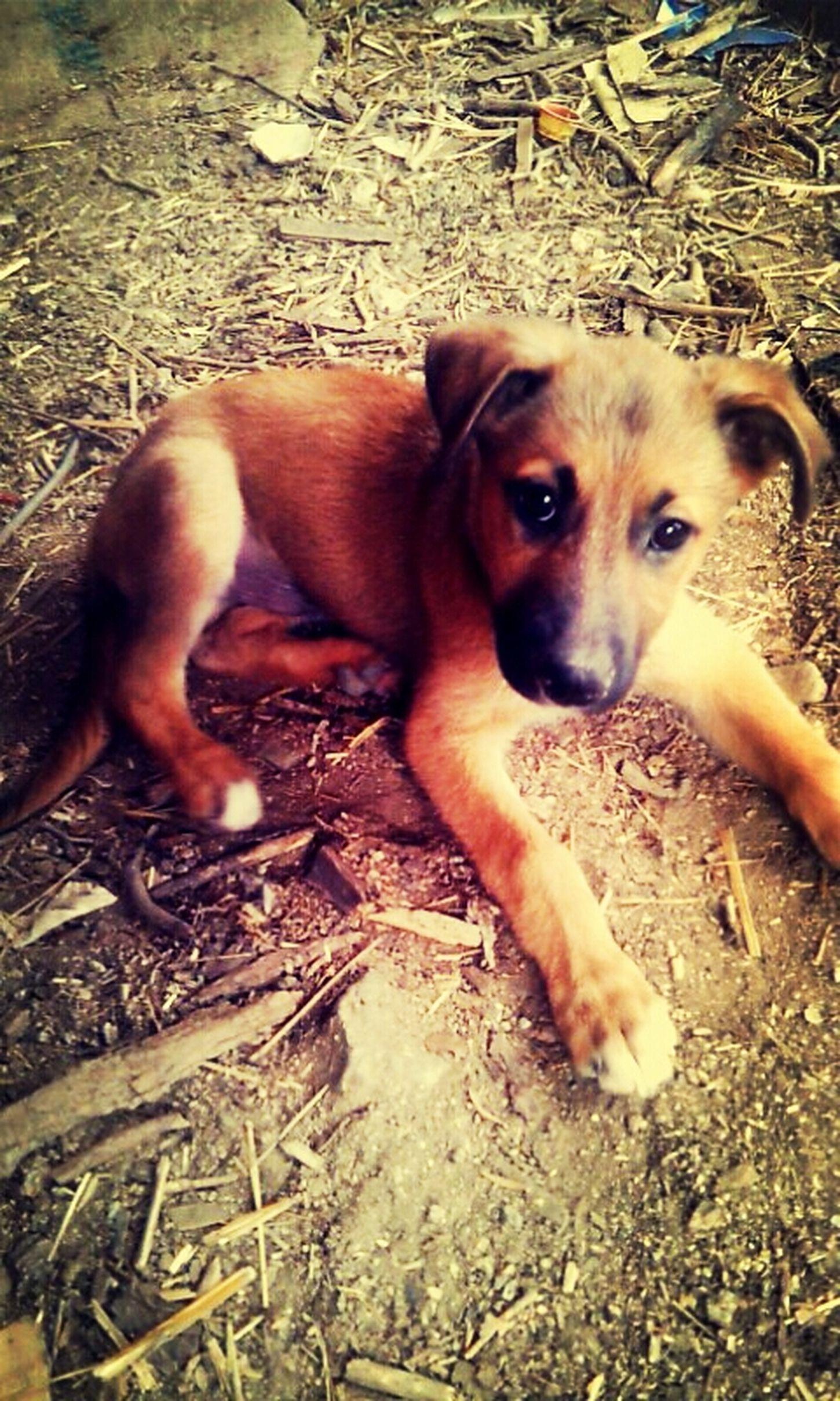 I Love My Dog ♥♥