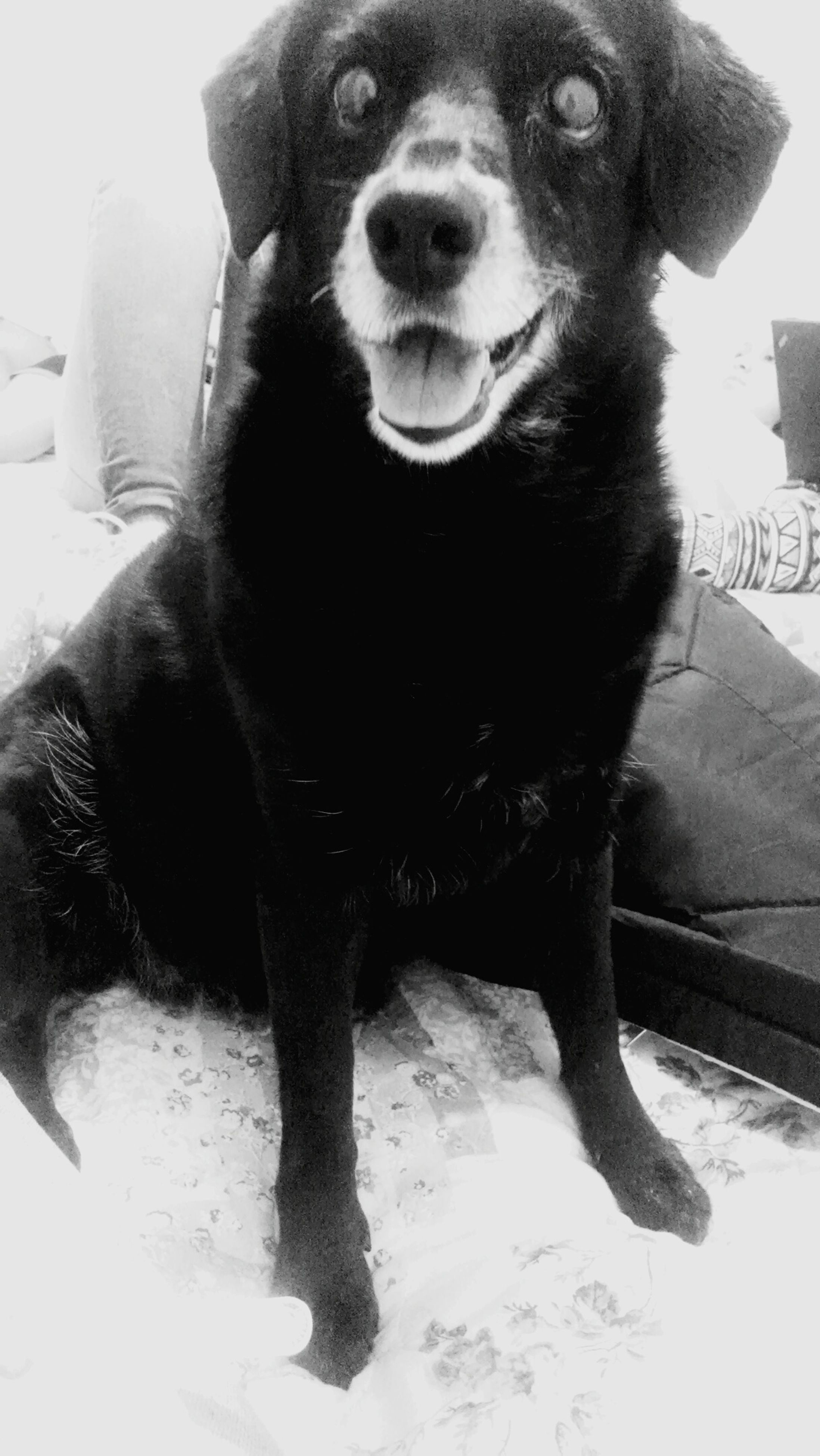 one animal, pets, dog, domestic animals, animal themes, mammal, portrait, looking at camera, sitting, close-up, front view, car, indoors, black color, animal head, snow, day, winter, no people