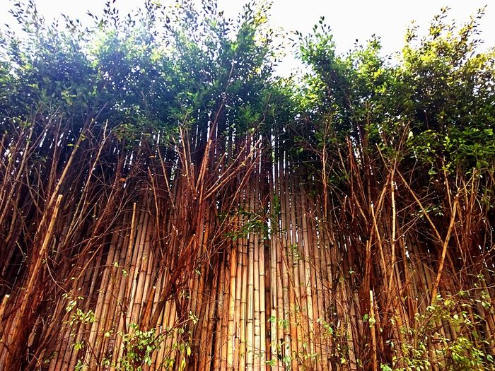 Wall Bamboo Wall Nature Wall Tree Wall Wall And Nature Wall And Tree Wall Photography Vintage Vintage Photography