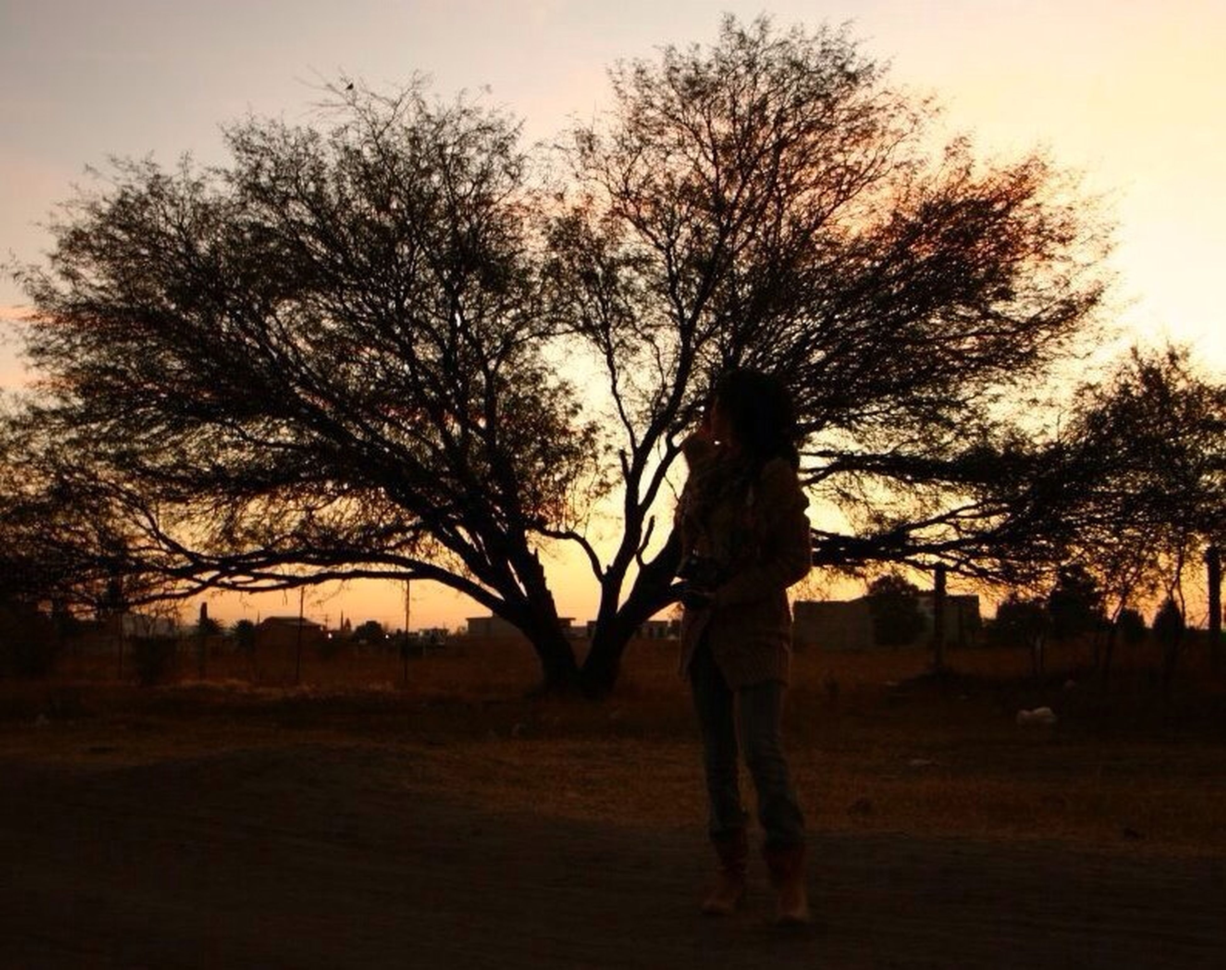 silhouette, tree, sunset, bare tree, field, lifestyles, tranquility, sky, leisure activity, tranquil scene, nature, landscape, standing, beauty in nature, men, person, scenics, sun