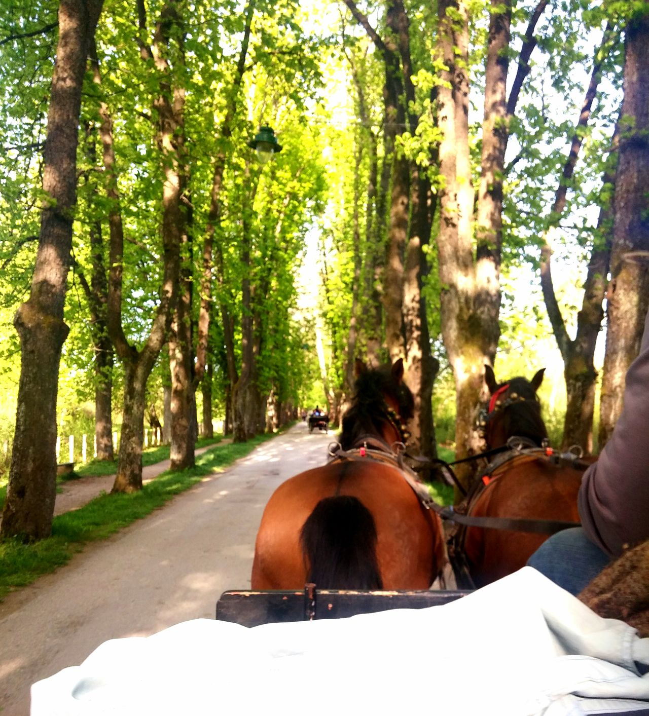 Carriage ride Horses Carriage Showcase April Spring Beautiful Sunny Day Nature Photography In Motion First Person View Art Vibrant Colorful Heavenly Time With Babe Tree Line Tree Lover