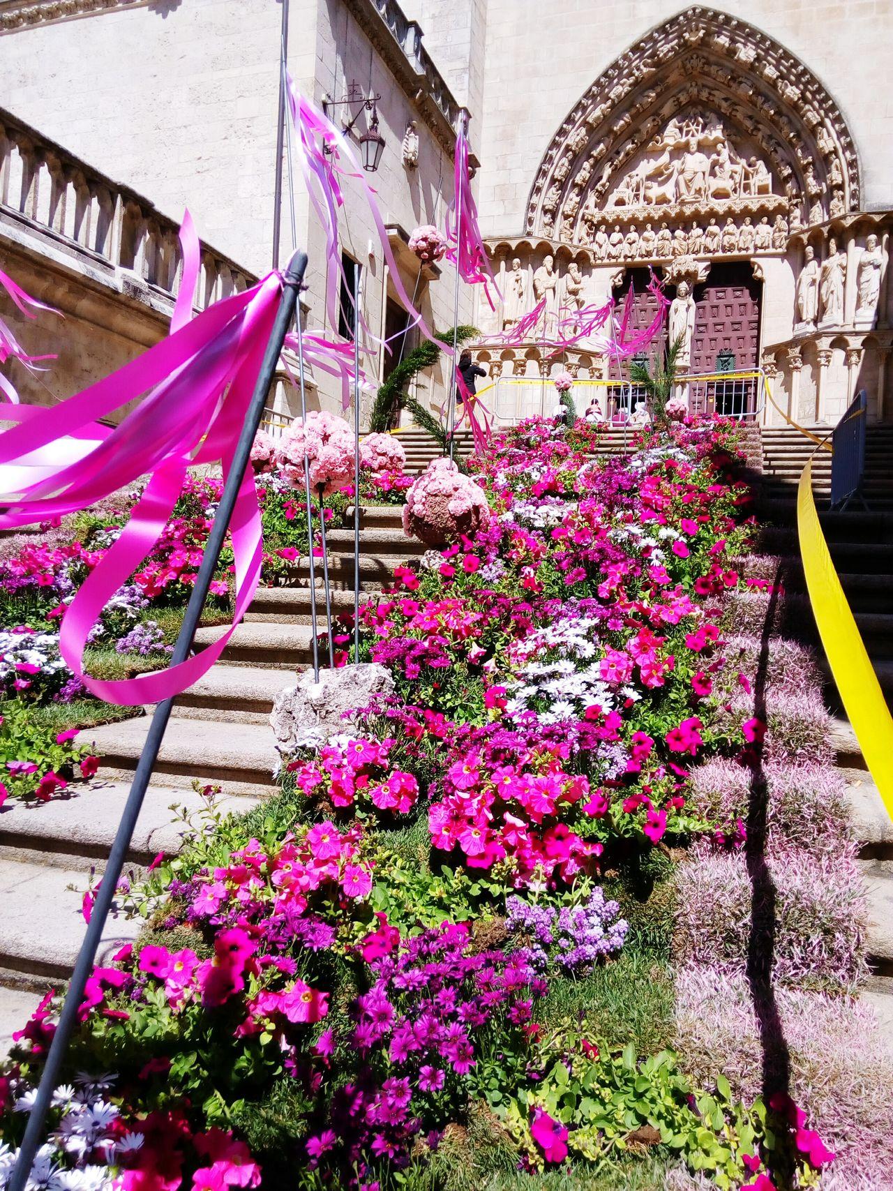 Gigant Stone Cathedral Burgos Catedral De Burgos Piedra Color Stairs & Shadows Escaleras