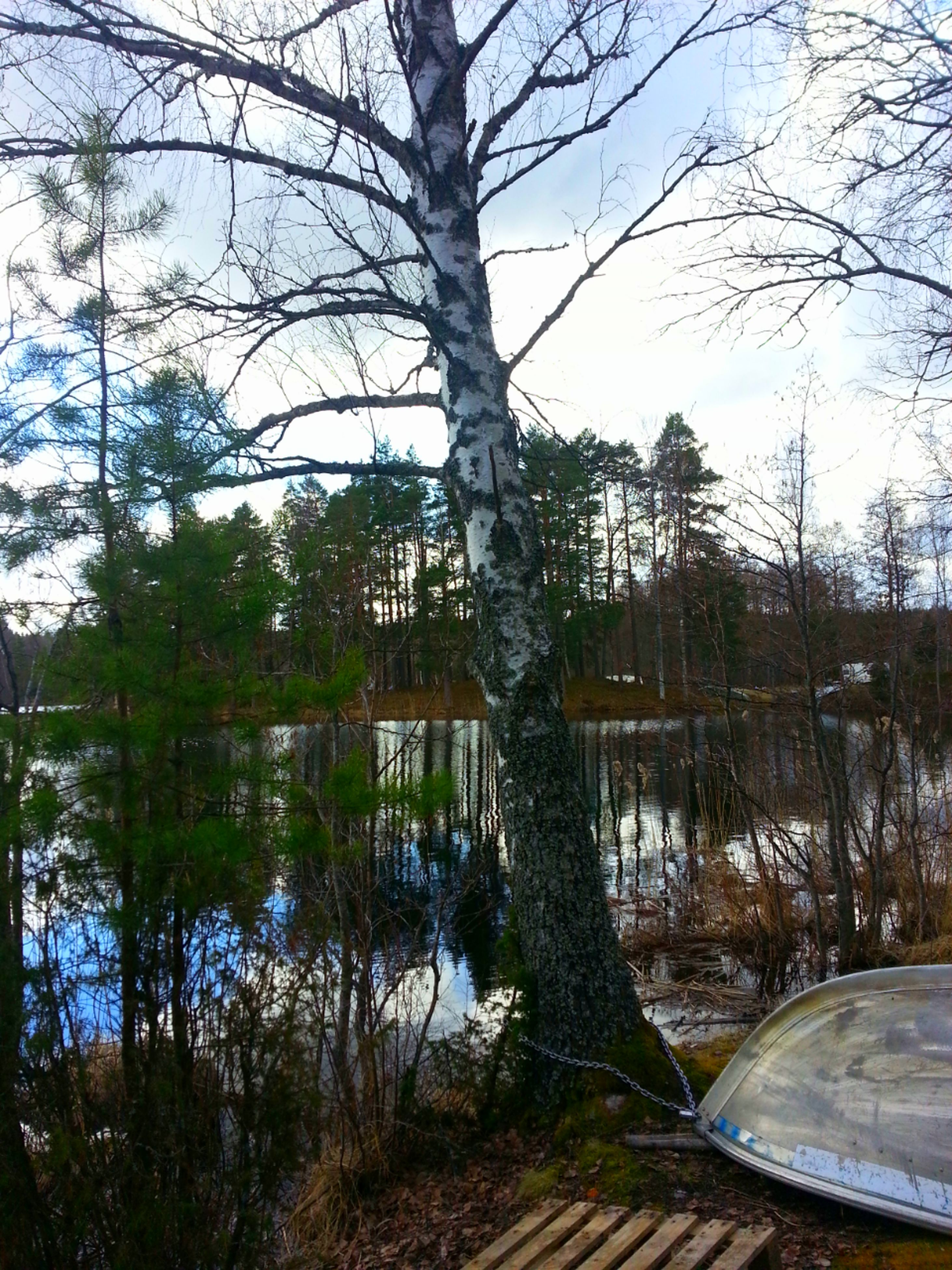 tree, water, lake, reflection, branch, built structure, tranquility, bare tree, architecture, nature, building exterior, tranquil scene, sky, tree trunk, growth, river, scenics, beauty in nature, sunlight, clear sky