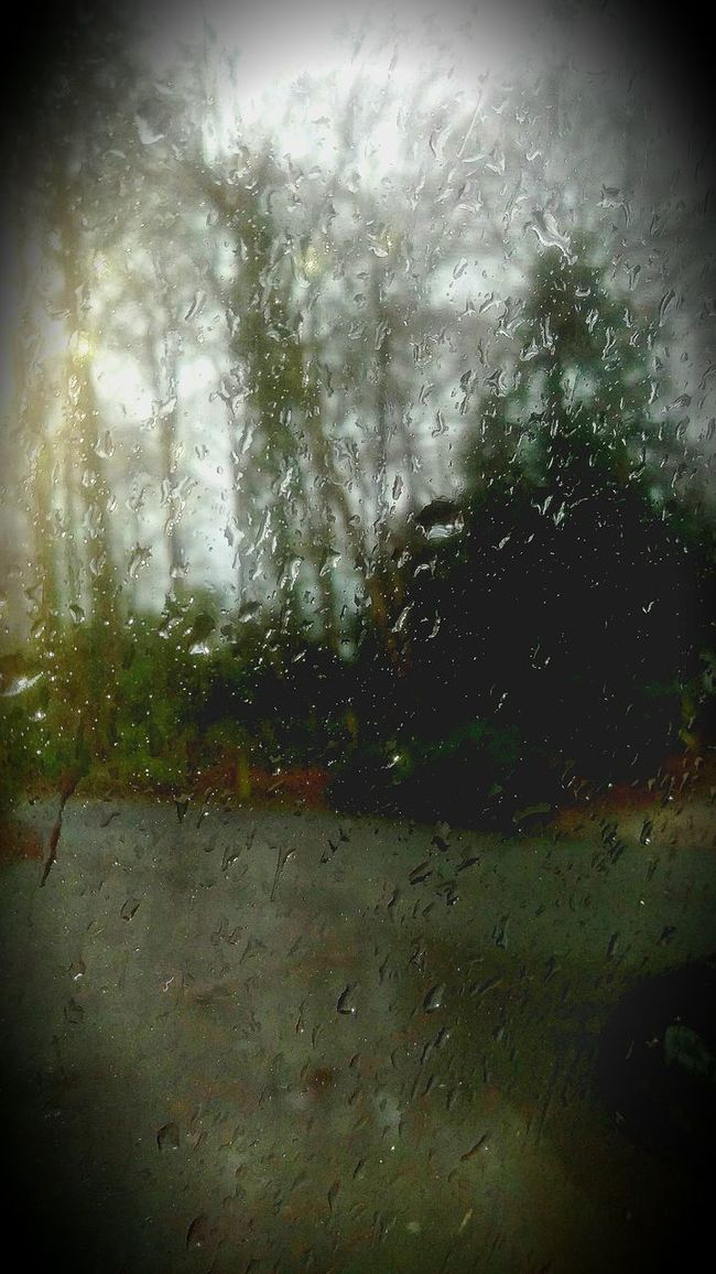 Rainy Day Forest Nature