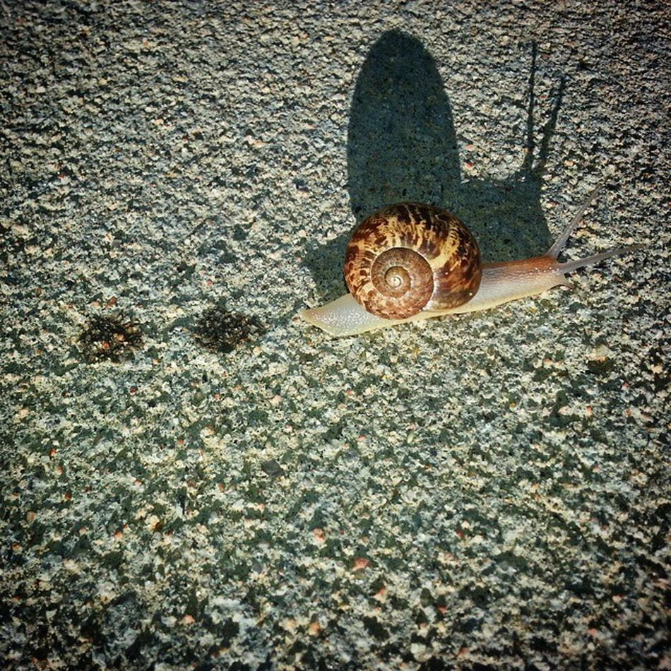 Walked my son to his 1st day of school and ran in to this guy on the way. He was the size of my thumb laid flat. I've never seen one this big here in Colorado before. Was pretty surprised. Eastlake 303 Slug Snail Turbo Onajourney Snailtrail Snailshell