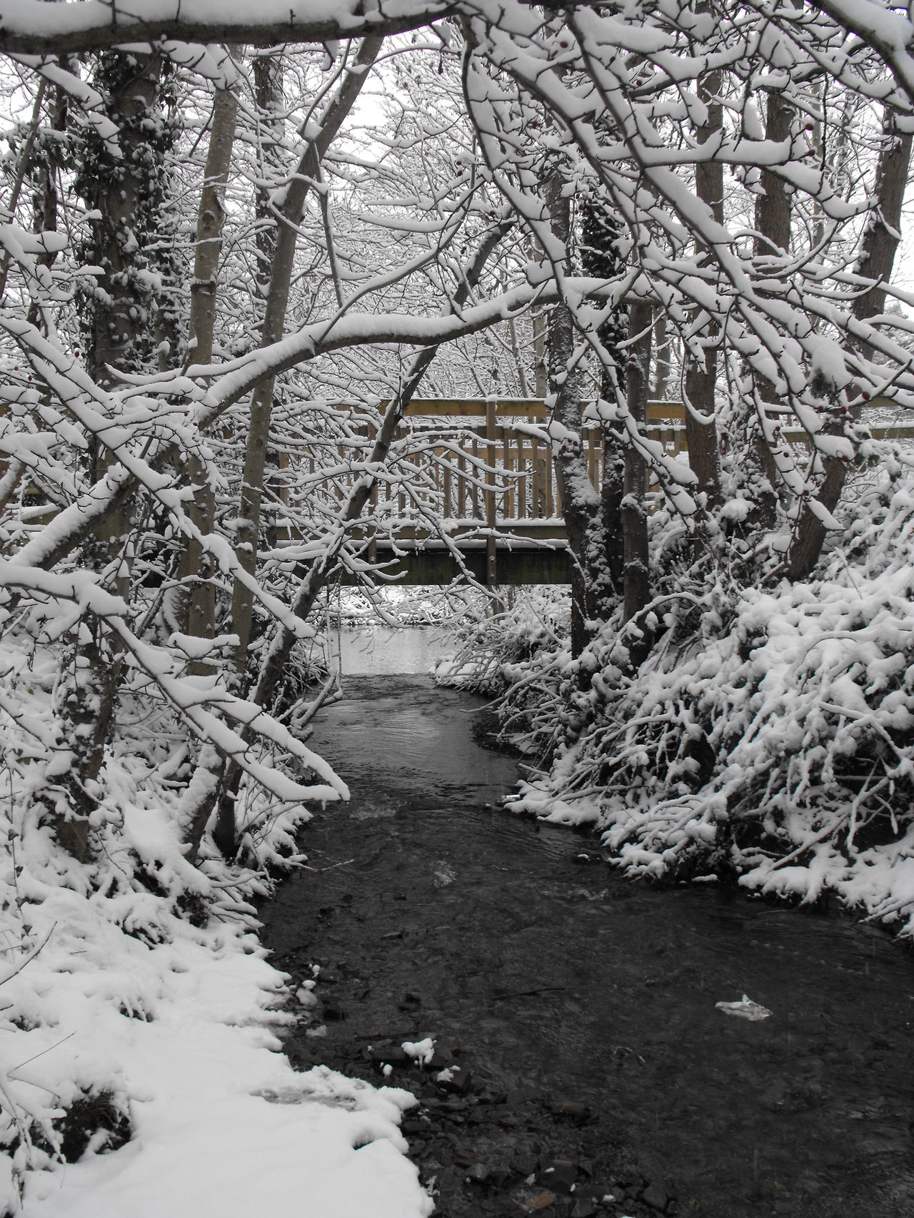 New bridge Beauty In Nature Branch Bridge Bridge - Man Made Structure Cerenity Contemplation Day Nature Newtown Powys No People Outdoors Park Peace River Scenics Silence Snow Stream The Way Forward Tranquility Tree Wales Winter Winter Wonderland Wooden Bridge