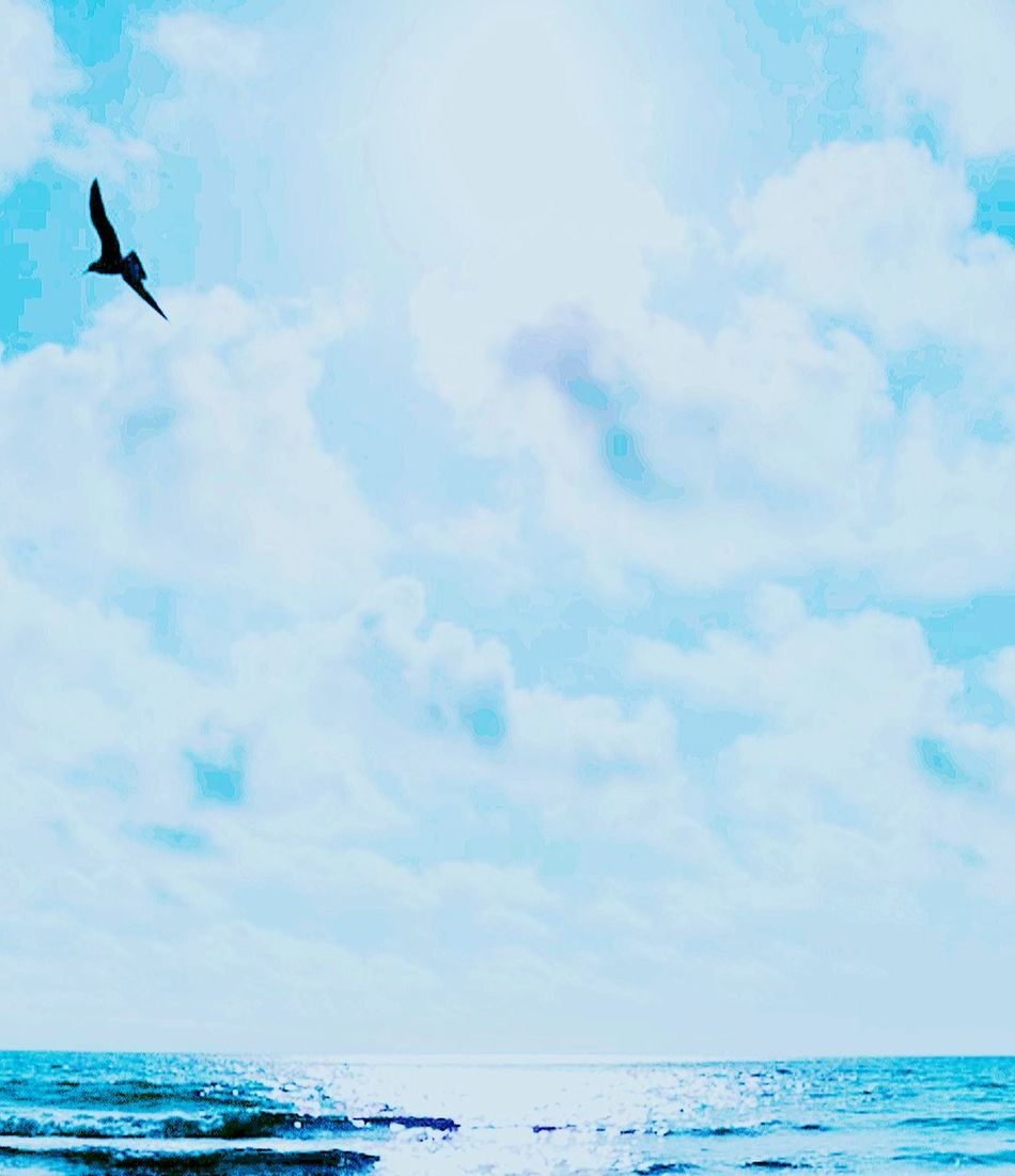 Seagulls And Sea Seagulls In Flight Lone Bird Ocean View Sky And Clouds Nature Photography Nature_collection Birds_collection Beautiful Nature Beautiful Amateur Photography Learning Photography Check This Out Dreamscapes & Memories Eyem Best Shots Nature_collection sunset #sun #clouds #skylovers #sky #nature #beautifulinnature #naturalbeauty photography landscape Worth Likes