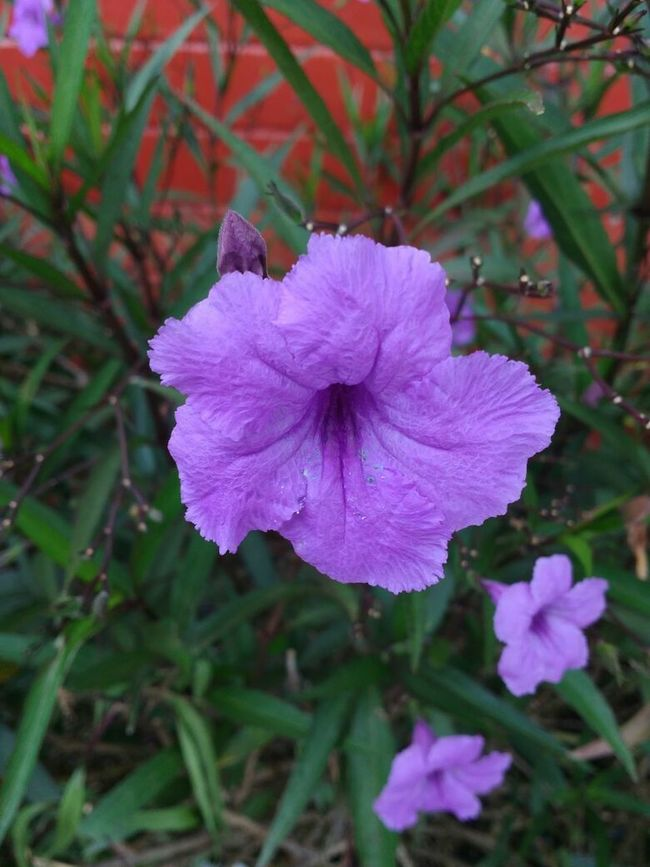Purple Flower :)<3 Felling Great Vibrant Color Just Remember