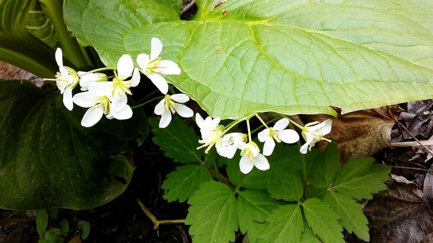 Leaf Nature Flower Beauty In Nature Close-up Plant Growth Blossom Springtime Fragility Green Color Outdoors No People Day Flower Head