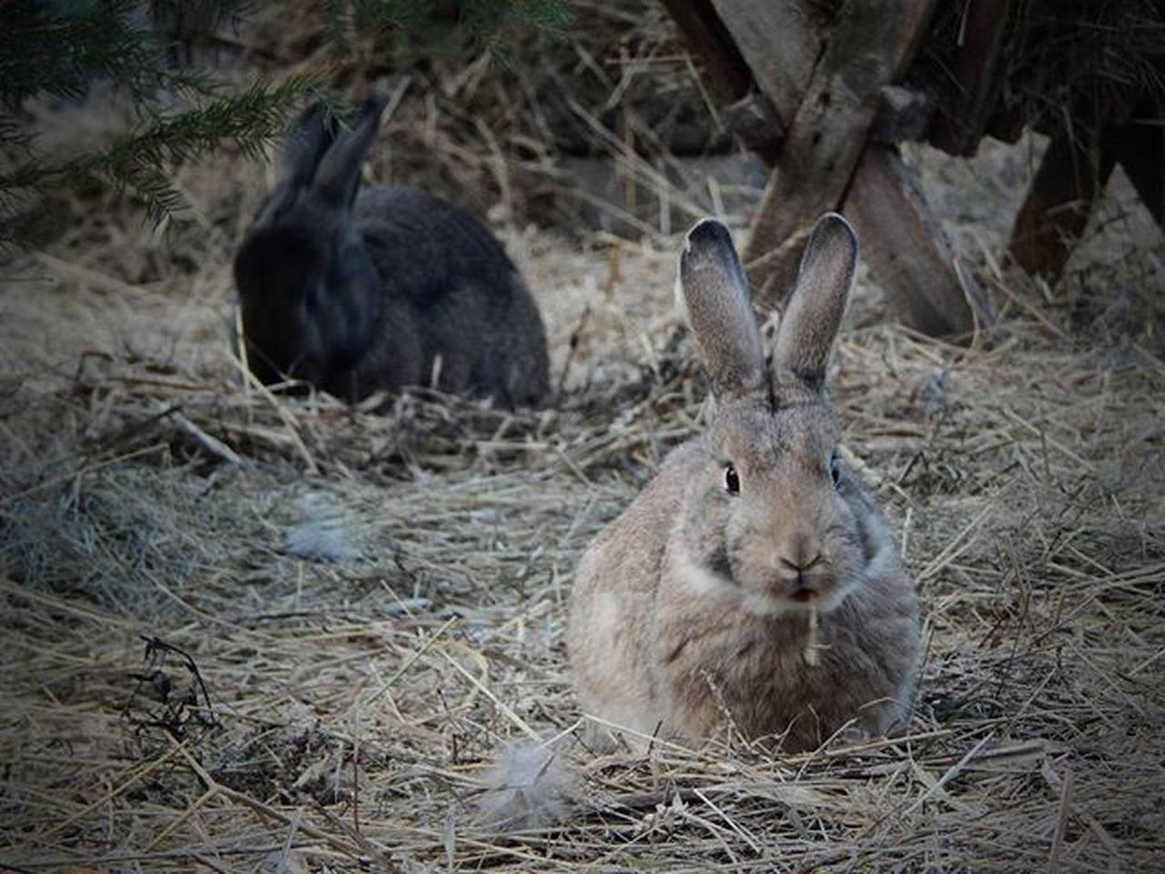 Trušu pilsētiņa Esplanādē Truši Trušupilsētiņa Esplanade Rabbit Rabbits Riga Riga Latvija Latvia