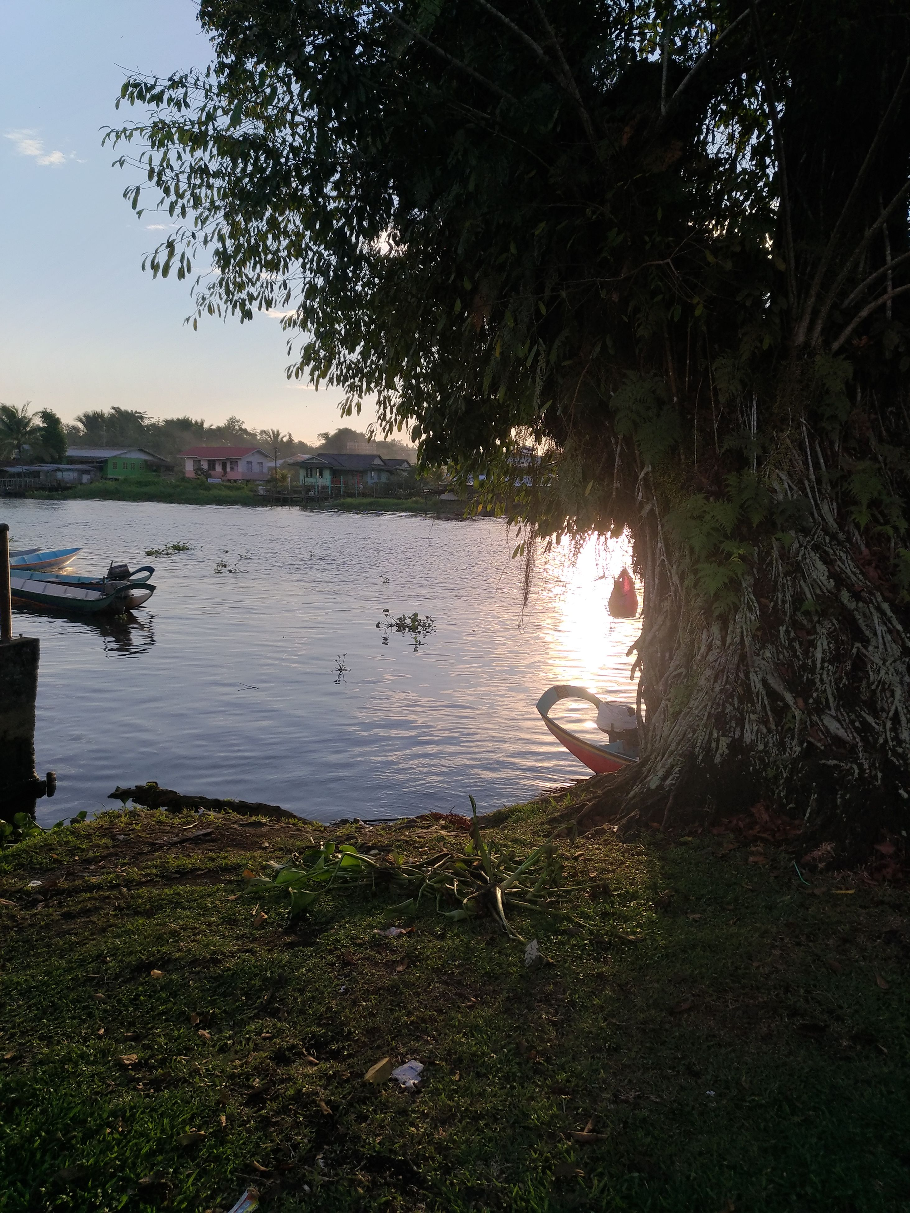 lake, water, tree, nature, growth, bird, no people, beauty in nature, outdoors, grass, animal themes, plant, animals in the wild, scenics, day, sunset, swimming, swan, sky