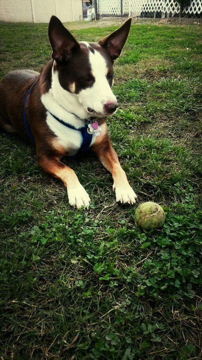 Losing my dog fat