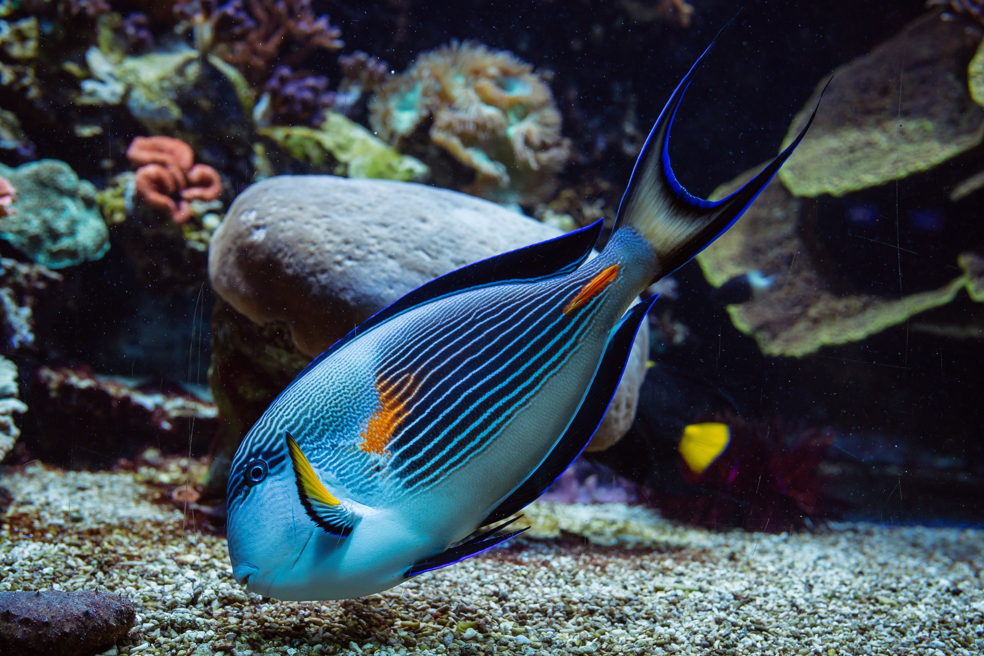 underwater, fish, undersea, sea life, swimming, animals in the wild, animal wildlife, sea, water, animal themes, no people, close-up, nature