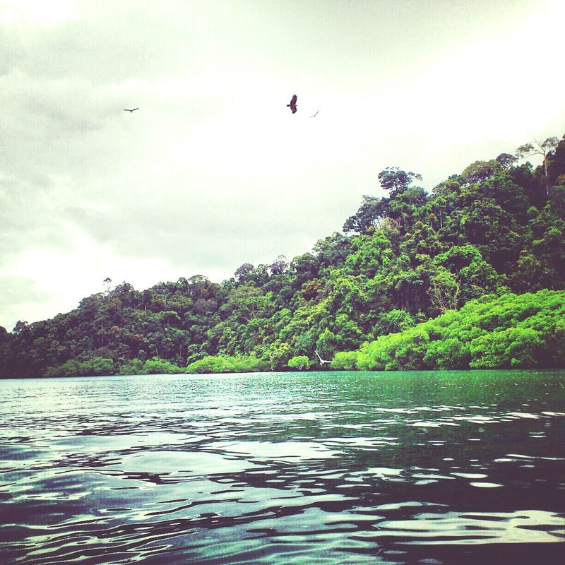 Beauty of Nature. Langkawi,Malaysia,Dec 2012. Adventures On A Boat Around The World