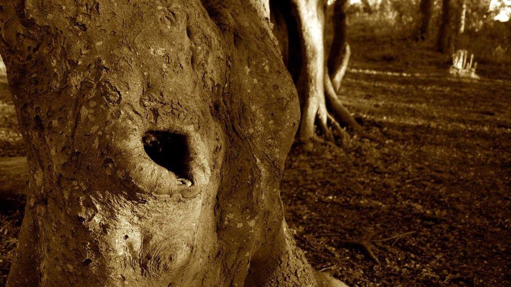 Sepia Sepiatone Sepia Photography Tree Trees Rule Of Threes