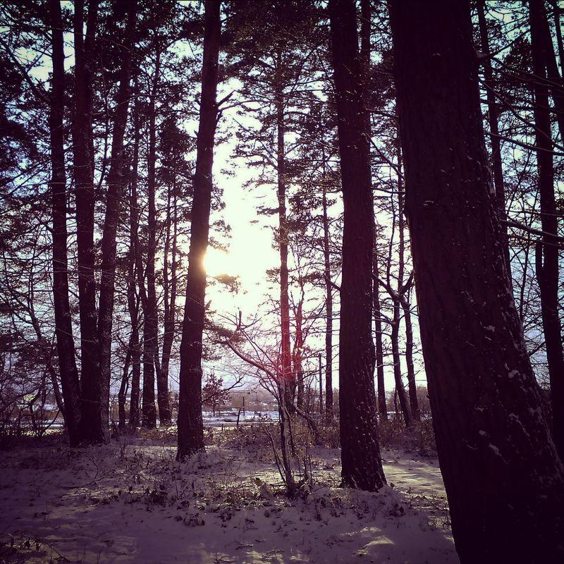 Forest Sky Winter Snow ❄ зима❄️ сніг❄ ліс🌿 сонце☀