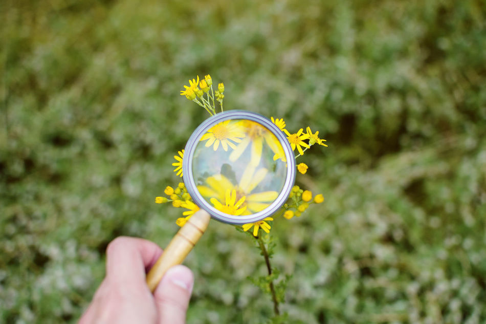 Bela Belarus Flower Flower Head Flowers Focus On Foreground Freshness Garden Growth Holding Human Body Part Human Hand Magnifying Glass Nature Outdoors Plant Plant Research Spring Summer