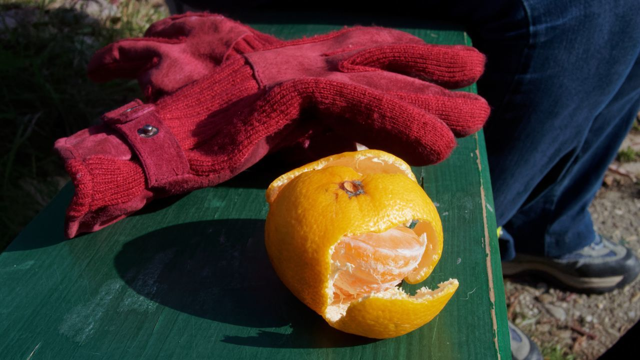 Citrus Fruit Close-up Day Food Food And Drink Freshness Fruit Gloves Healthy Eating Human Body Part Human Hand Low Section One Person Orange - Fruit Outdoors People Real People Red Gloves