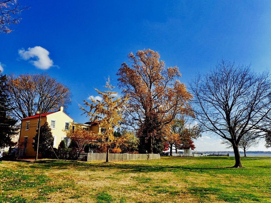 Tree Building Exterior Sky Architecture No People Built Structure Grass Outdoors Bare Tree Nature Day