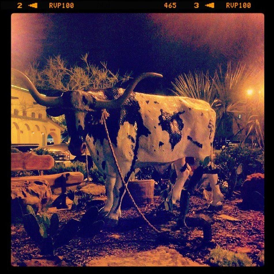 My it's a cow!