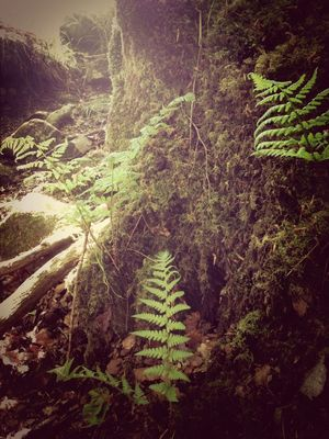 ferns at Langbank by juradub