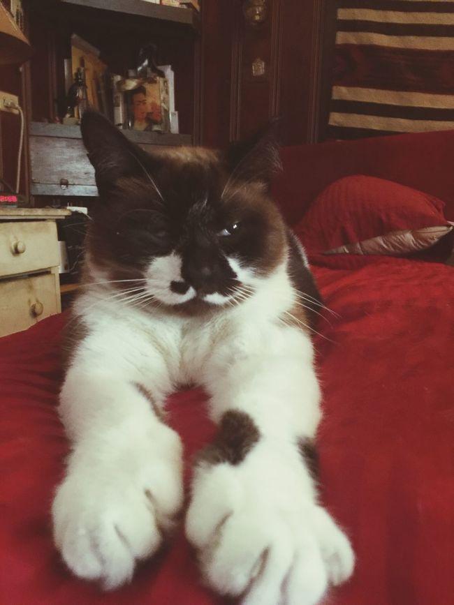 Cat Cat Lovers Catoftheday Catsagram Cats Of EyeEm Cats 🐱 Catafor Catifornia Long Legged Cat Big Feet