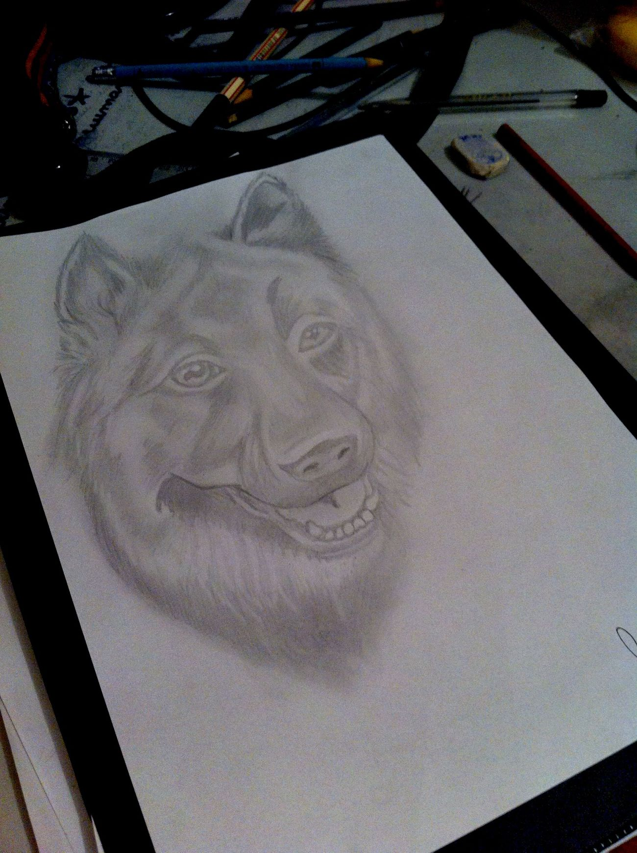 100% Drawing Drawdog German