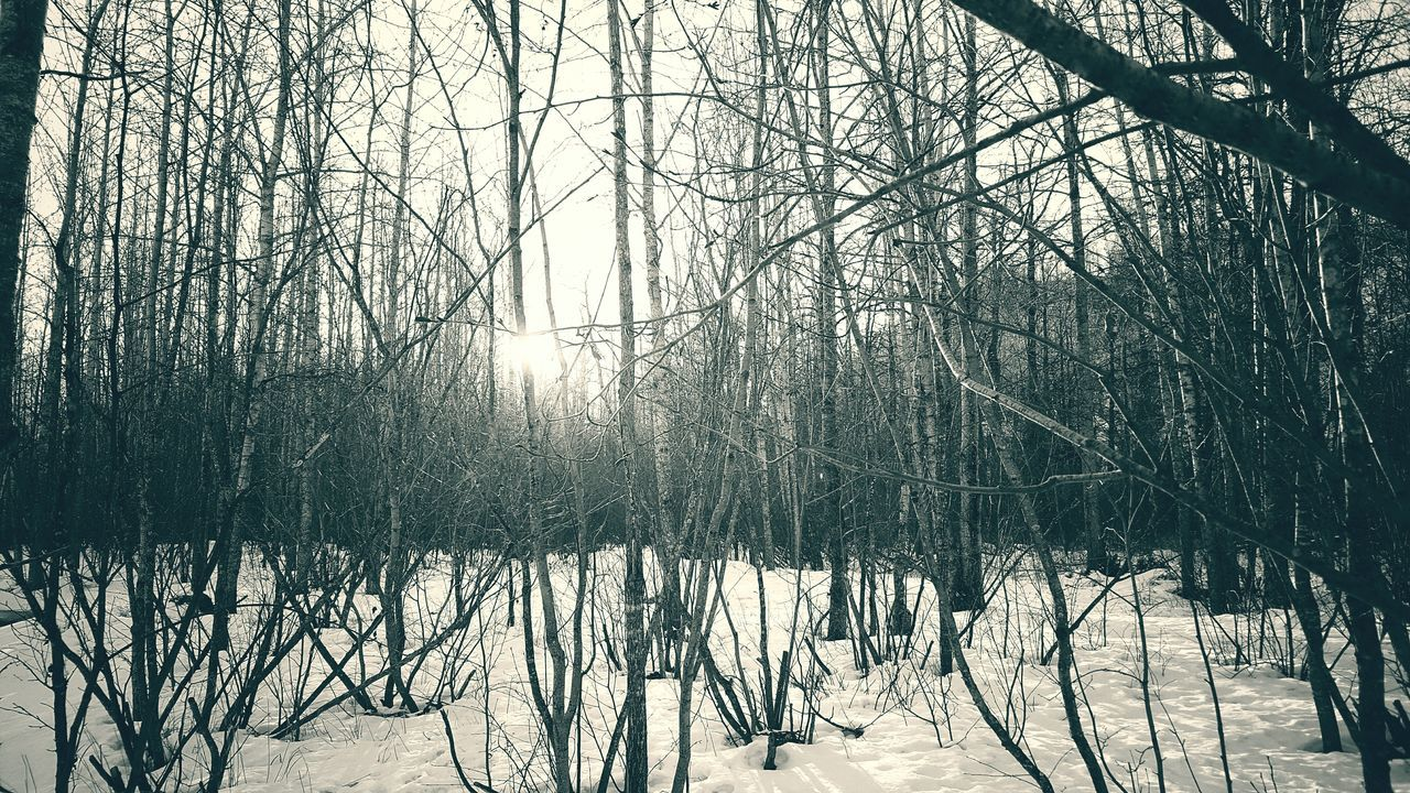 Snowy Forest Forest Photography Black And White Black & White Forest Snow Trees Alaska Nature Photography Nature