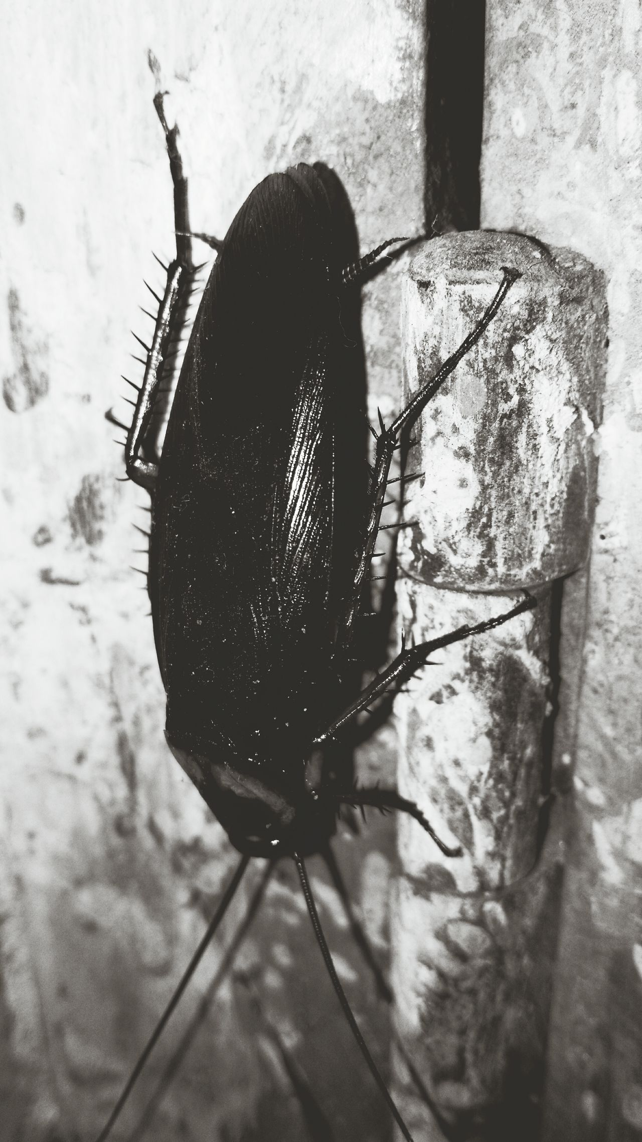Beautiful stock photos of cockroach, Animal Antenna, Animal Themes, Animals In The Wild, Close-Up